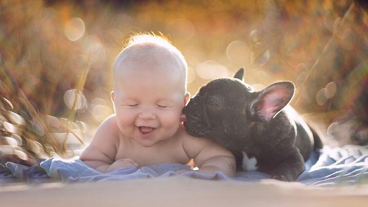 bebe y bulldog inseparables 1