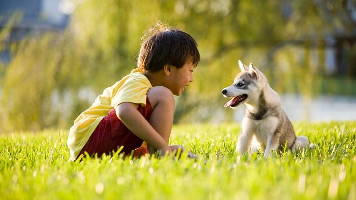 ninos mascotas beneficios